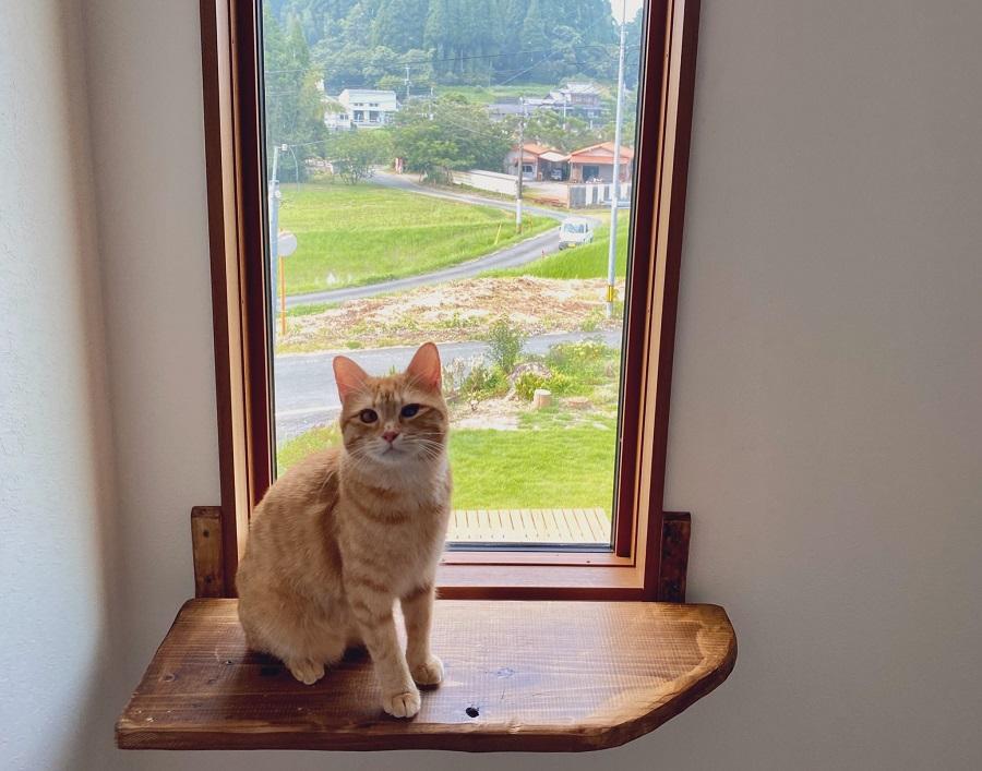 これぞ猫ファースト?猫のための窓に猫も大満足