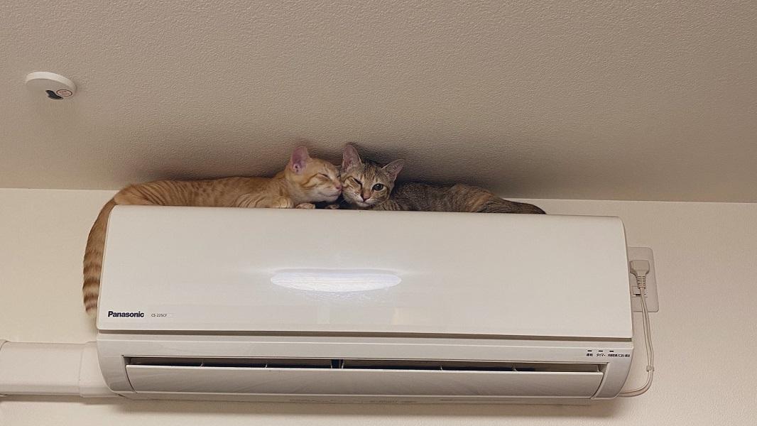 どうやって登ったの!?エアコンの上にいる猫にビックリ