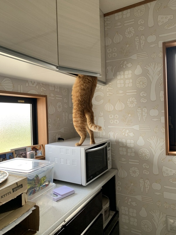 名探偵?泥棒猫?おやつのありかを探り当てる猫の姿を激写