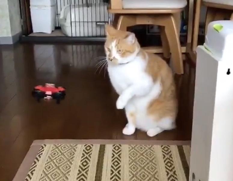 「お見事!」必殺の猫パンチでドローンを叩き落とした猫