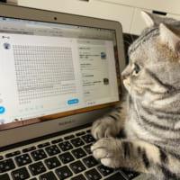 「いまからついーとしますにゃ」 猫の手を借りたツイートが話題