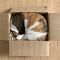 「匣の中には綺麗な猫がぴったり入ってゐた」 段ボ…