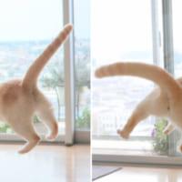 猫がUFOに吸い込まれそうに? 無重力感ある写真…
