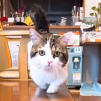 何かに気づいてアタフタ 挙動不審な猫ちゃんの様子が面白おか…