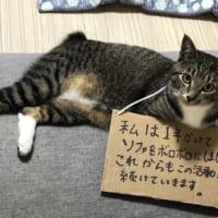 反省どころか開き直る猫?「これからもこの活動は続けていきま…