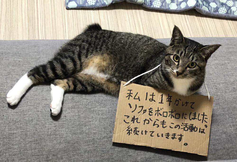 反省どころか開き直る猫?「これからもこの活動は続けていきます」