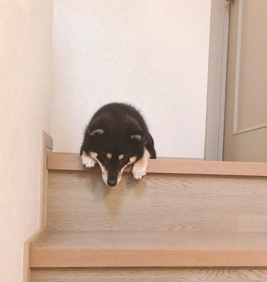 完全に詰んで「しょぼん」な犬 部屋に入れない…階段下りられない…
