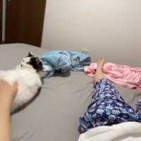 猫のローリング添い寝に「たまらん」「羨ましい」の声