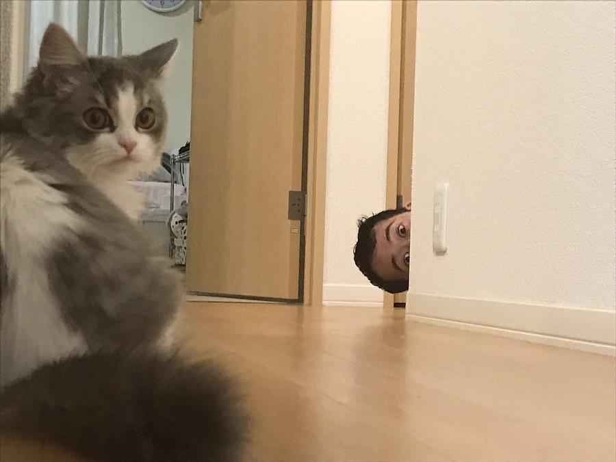 猫も困惑?夫のいたずらが予想の斜め上をいく