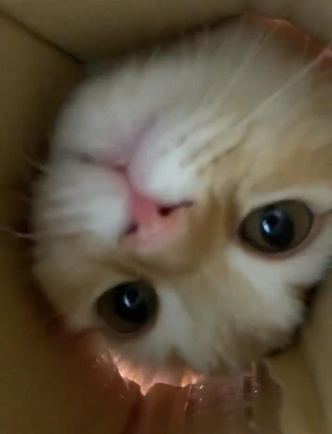 ちゅ~るにつられて穴に顔をのぞき込む猫の顔のアップが可愛すぎる