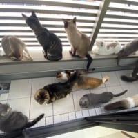 非常に密です!!ベランダでくつろぐ猫たちのようす…