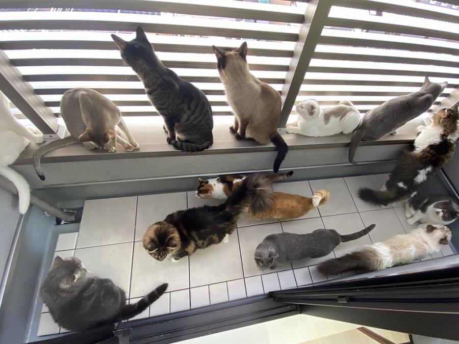 非常に密です!!ベランダでくつろぐ猫たちのようすが圧巻の密