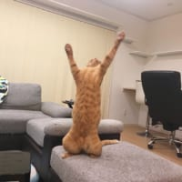 セリフをあてたくなる猫の写真が話題 「やりましたあ!」「エイドリアーン!」