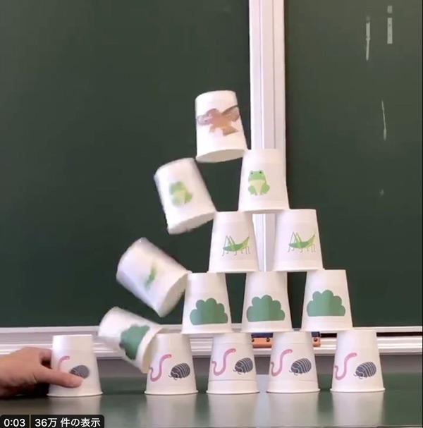 互いの支え合う関係がよく分かる!紙コップで作る「食物連鎖ピラミッド」