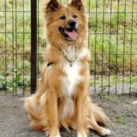 保護犬をアニマルコミュニケーションでサポート NPO法人しっ…