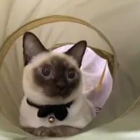 アイ・ニャン・フラーイ! 猫ちゃんが猛ダッシュで…