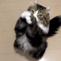 朝の大事なごあいさつですニャ おねだりポーズをする猫ちゃん…