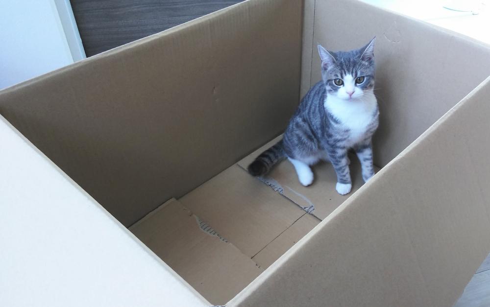 「お届け物でーす」子猫ちゃんが配達されてきた?
