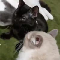 ニャンともうらやましい 新入り猫が受けた「世界一受けたい接…