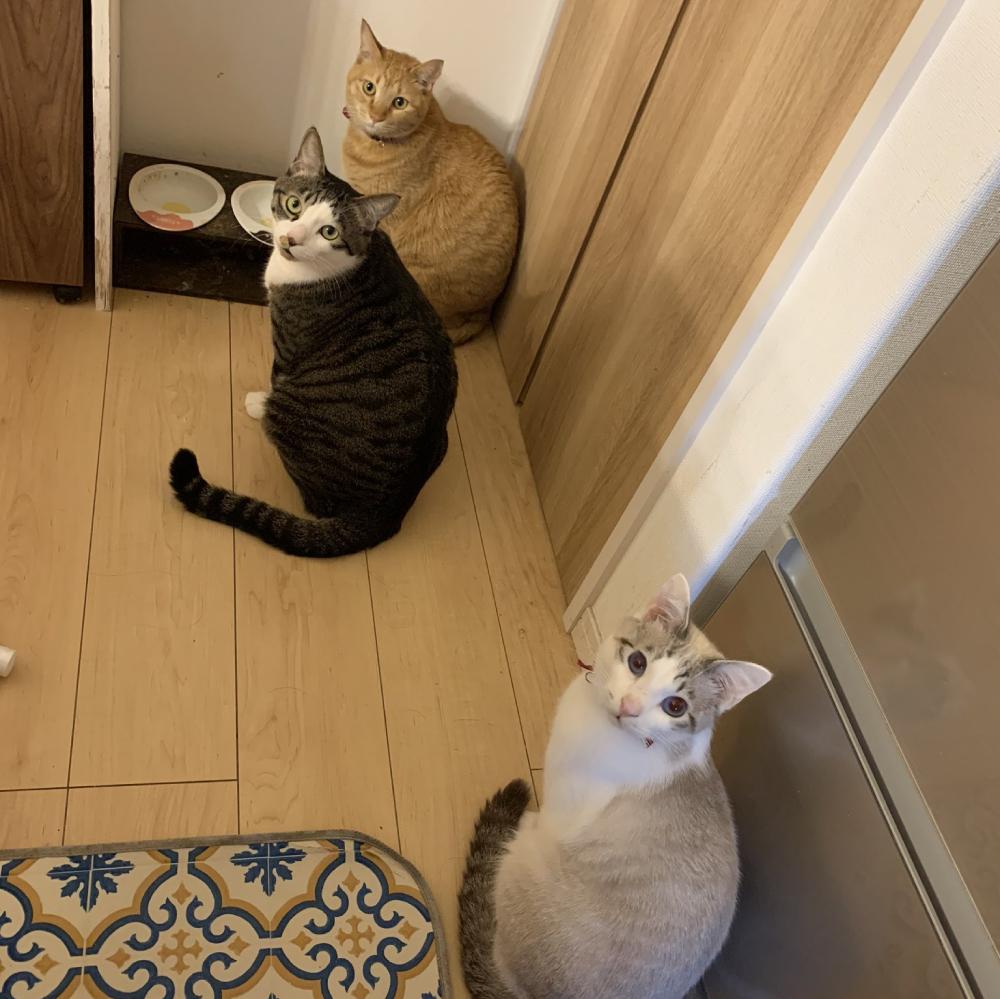 無言の圧? エサが来るまでじっと待つ3匹の猫