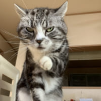 「話の途中なんすけど……」 複雑な表情の猫さん その視線の先には?