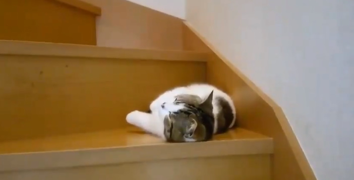 そんなとこで?パパの帰りを待ちきれずに寝てしまった猫ちゃん