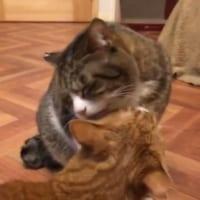 怒りのスイッチどこ?ペロペロからまさかの猫パンチ