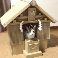 「元祖段ボール猫神社」を覚えていますか?話題のその後