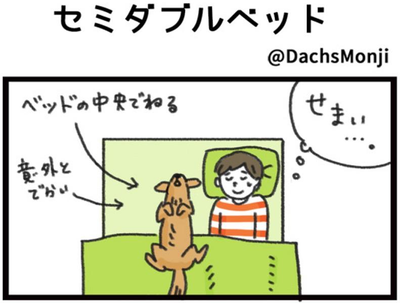 愛犬と寝るためにセミダブルベッドを購入 待っていたのは「あるある」な展開