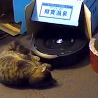 ルンバから「動けないよ!助けて!」とエラー通知 犯人はまさかの愛猫