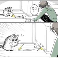 猫あるあるな遊びのスタイル? 「ソファーの下におもちゃを即…