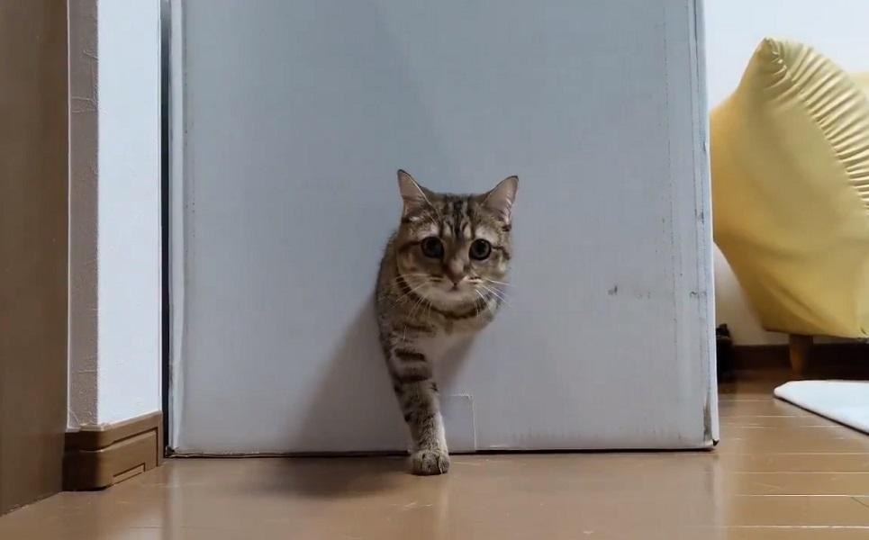 猫を無限に生成する永久機関を発見!?「ここから世界中の猫が……」