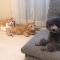 3匹の猫「ジー……」 熱い視線に思わず二度見してしまった犬
