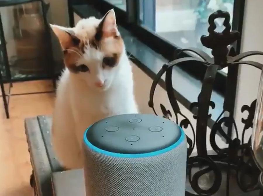 喋るアレクサに戸惑う猫 お話してる人はどこ?