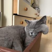 寝ている間にほっぺが液状化しちゃった猫 こぼれおちそう……