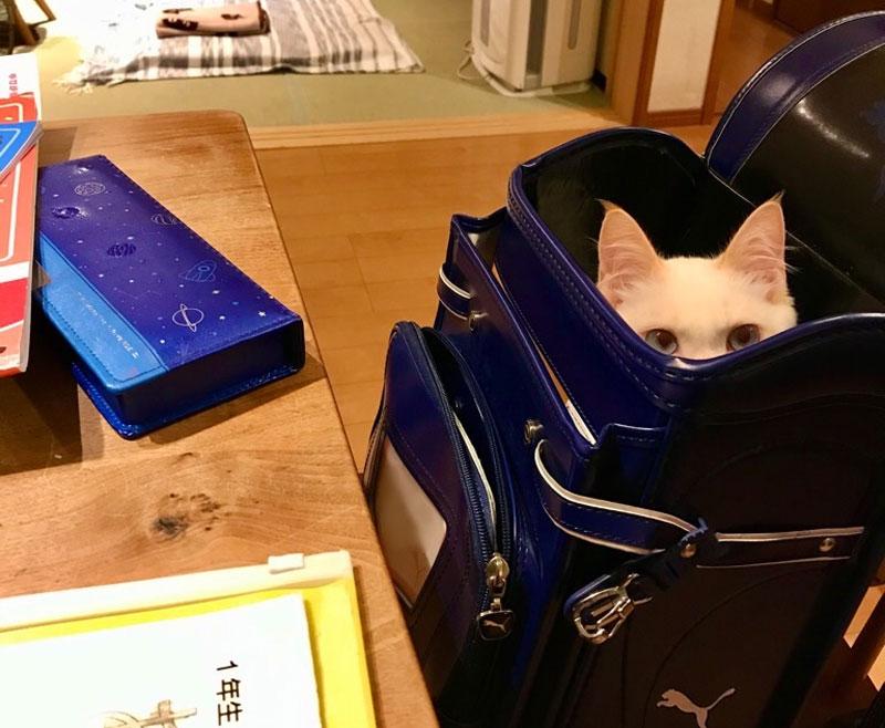 息子VSランドセル好き猫 明日の準備を巡る攻防戦