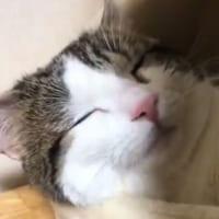 猫の寝顔は最大の癒やし スヤァっと気持ちよさそうに眠る猫ち…
