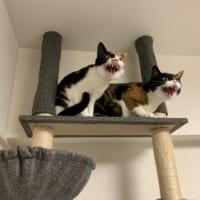 「掃除機は絶対許さない会」 猛抗議する猫
