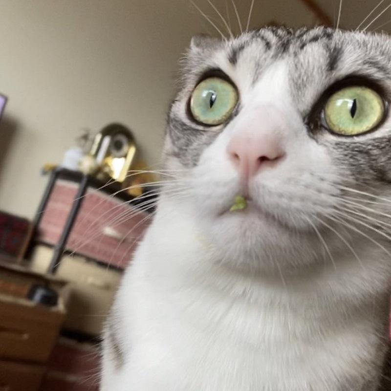 口元に物的証拠が……それでも黙秘を続ける猫
