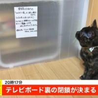 ニュース速報!テレビボード裏が閉鎖されて落ち込む猫 「もう…