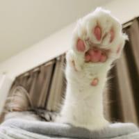 「猫の手ありますよ」 プニプニ肉球を見て貸出希望…