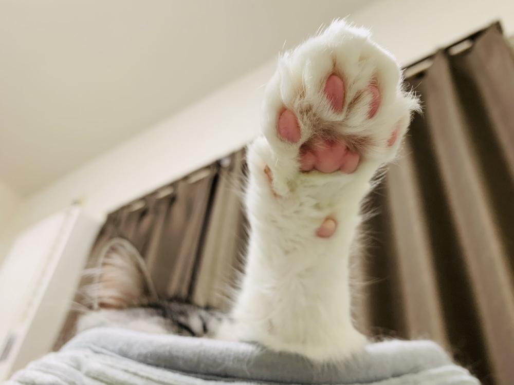 「猫の手ありますよ」 プニプニ肉球を見て貸出希望者が続出する