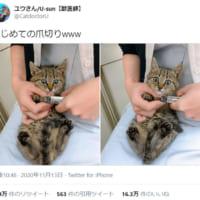 初めての爪切り……目を丸くして驚く子猫が可愛すぎる