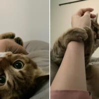 「特別休暇使えますよね?」 懸命に「申請依頼」をする愛猫が尊い