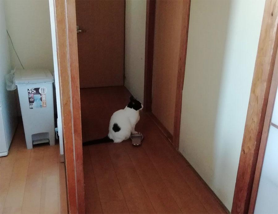 健気が過ぎる リモート授業中の飼い主の息子の「帰り」をじっと待つ猫
