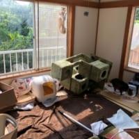 保護猫活動にはそれなりの覚悟が必要 家の様子を紹…
