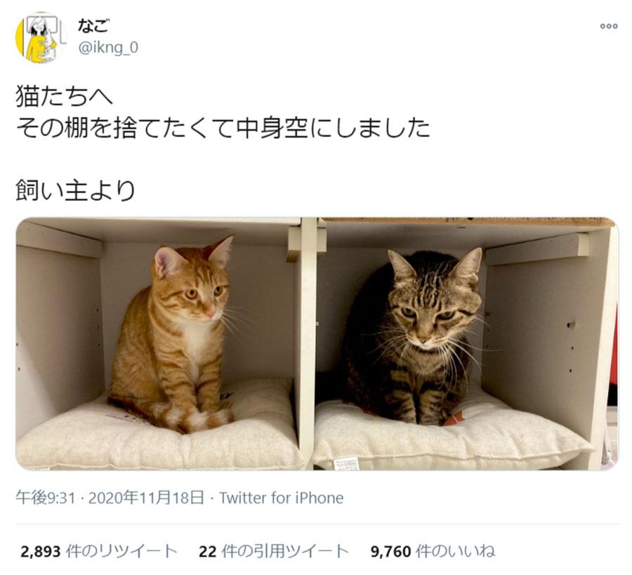 棚を捨てようと中身を空に→猫が即入居してしまうあるある展開