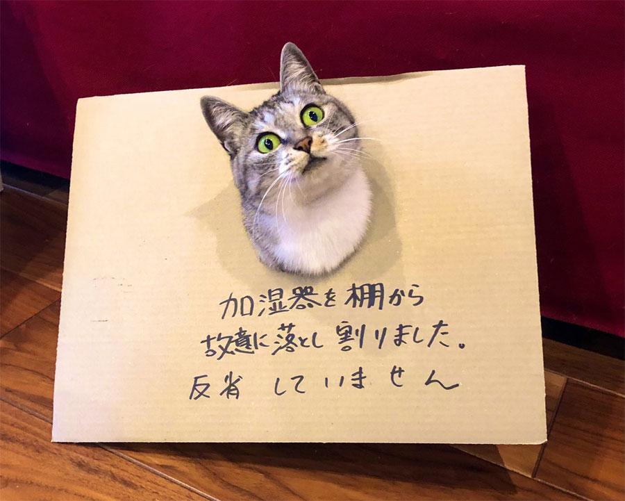 「反省していません」 加湿器を割った猫のドヤ顔に爆笑