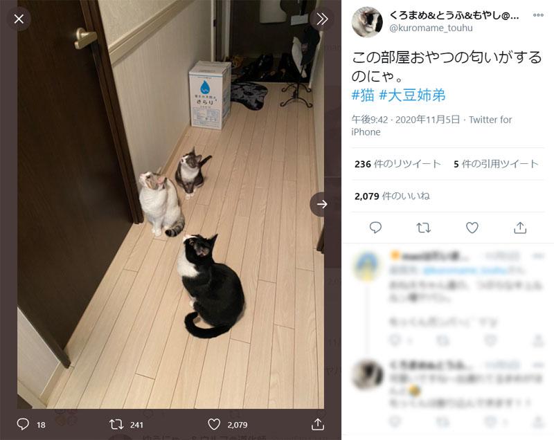 「この部屋に必ずある!」ご飯の場所を探し当てた猫たち