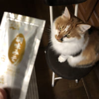 誤解…これは味噌 「猫って食いしん坊だね」というお話